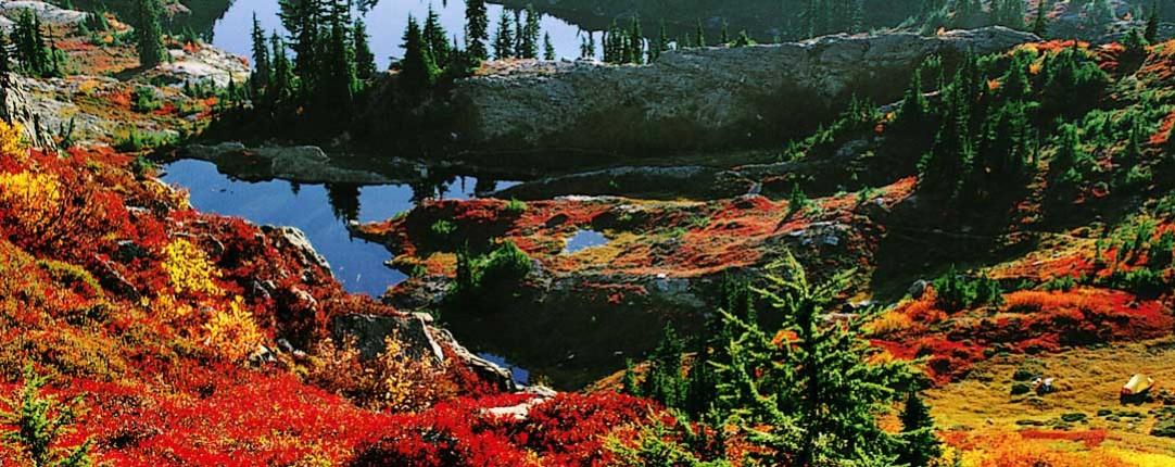 Northwest Natural History Writing